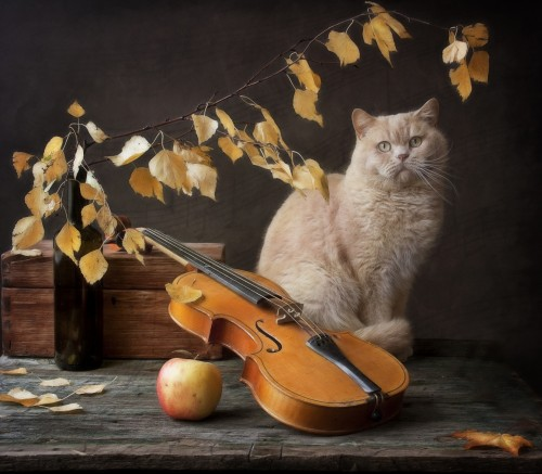 Autumn Melody for  Сat  and violin by Eleonora Grigorjeva