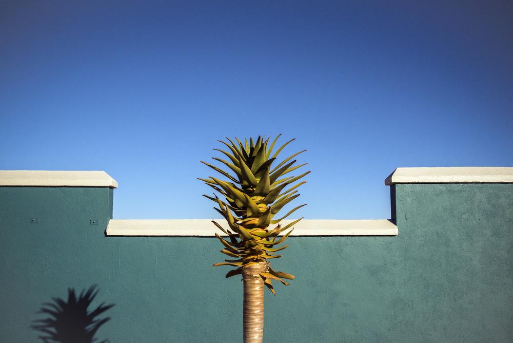 Fotokonst the desert blooms
