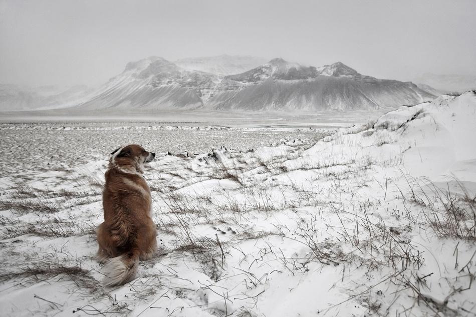 Poster Snowstorm