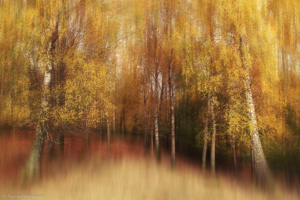 Fotokonst Autumn Impression