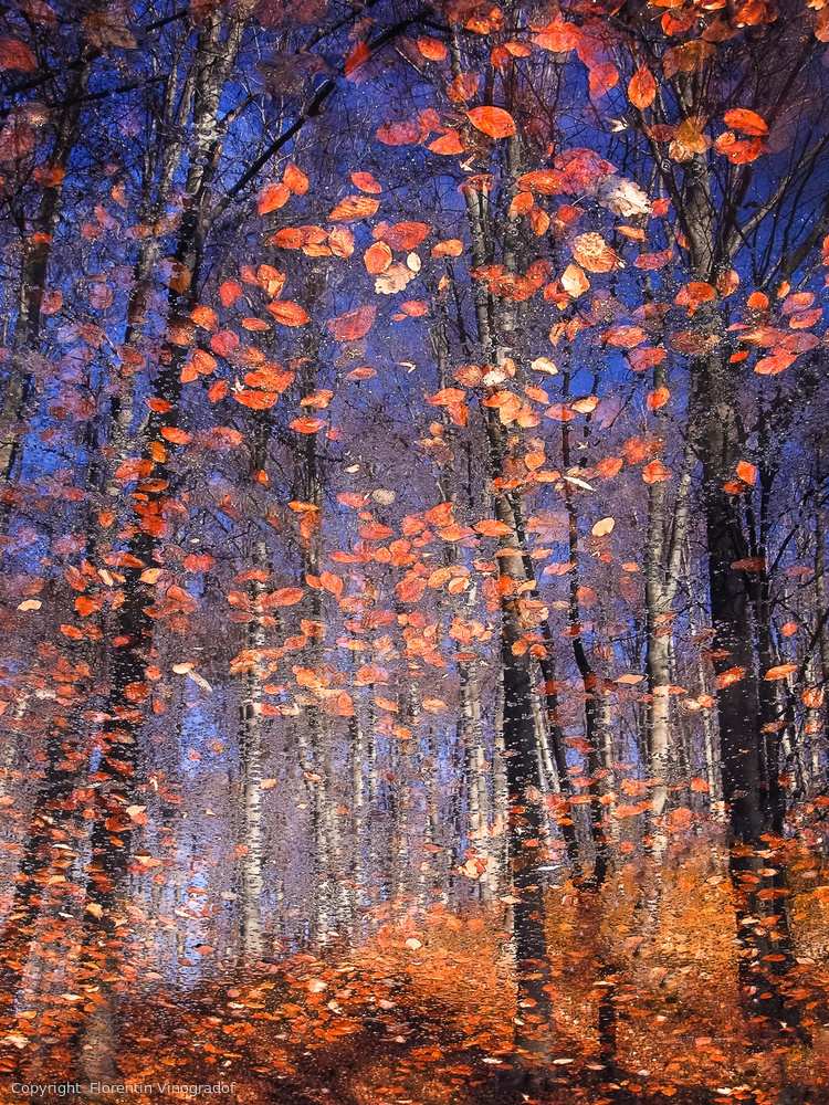 Fotokonst Autumn Leaves