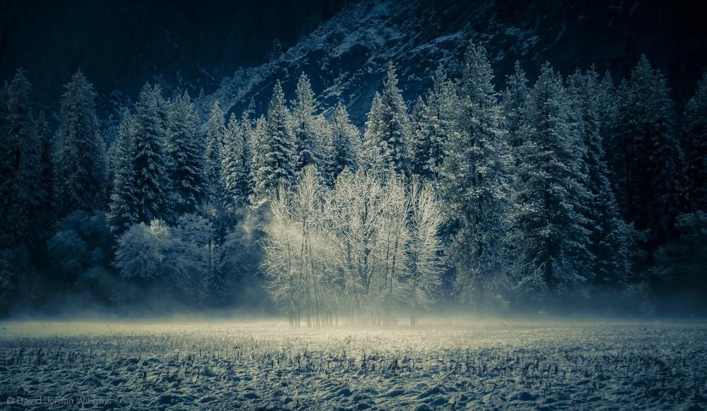 Fotokonst Aspen Grouping - Yosemite Valley