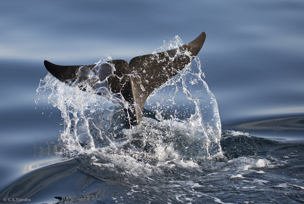 Fotokonst Splash