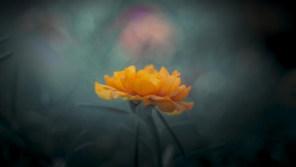 Fotokonst Yellow