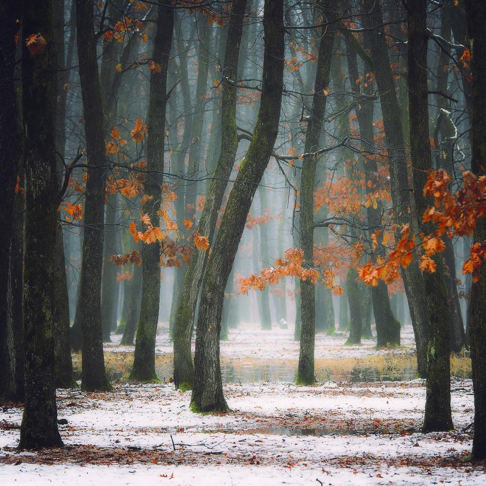 Fotokonst Autumn in my soul