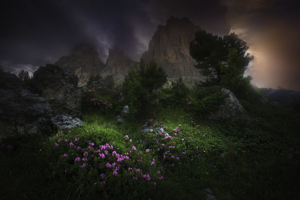 Fotokonst Garden of Eden