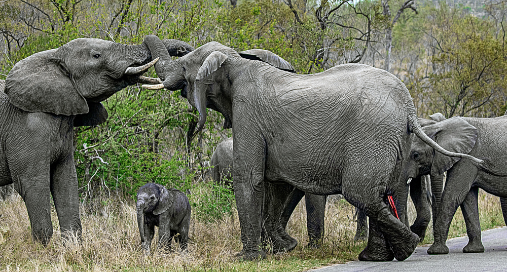 Kruger National Park: Nature Photographers' Paradise