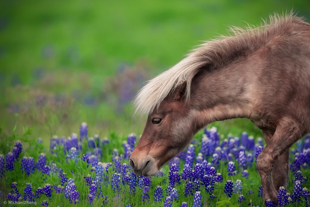 Fotokonst Spring Is In The Air...