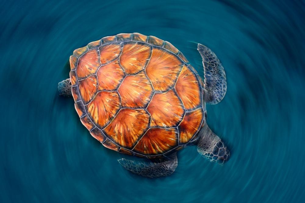 Fotokonst spin turtle