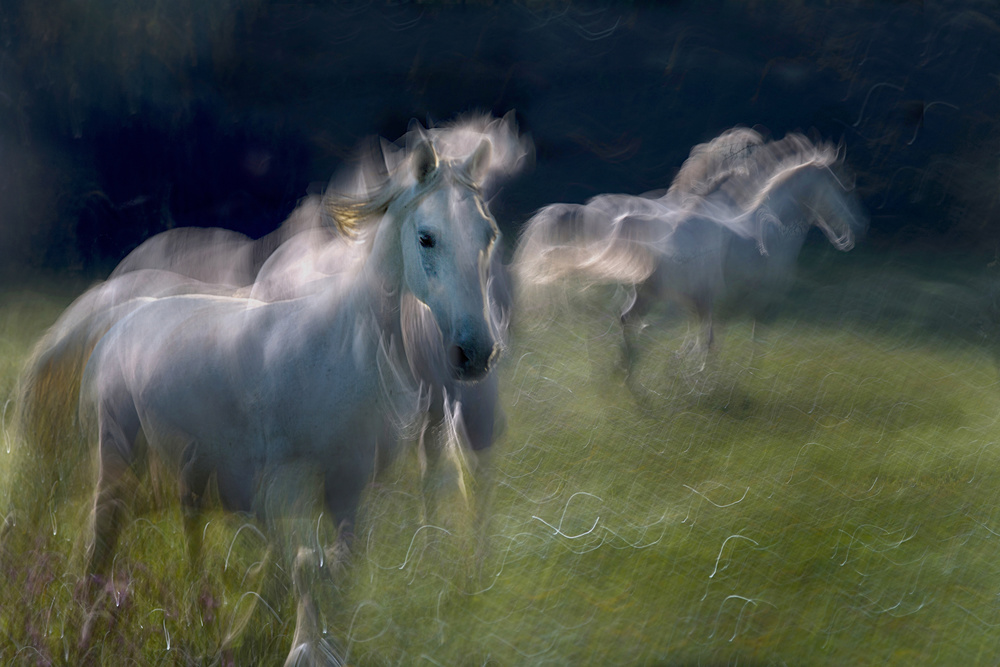 Fotokonst  everyday life on pasture
