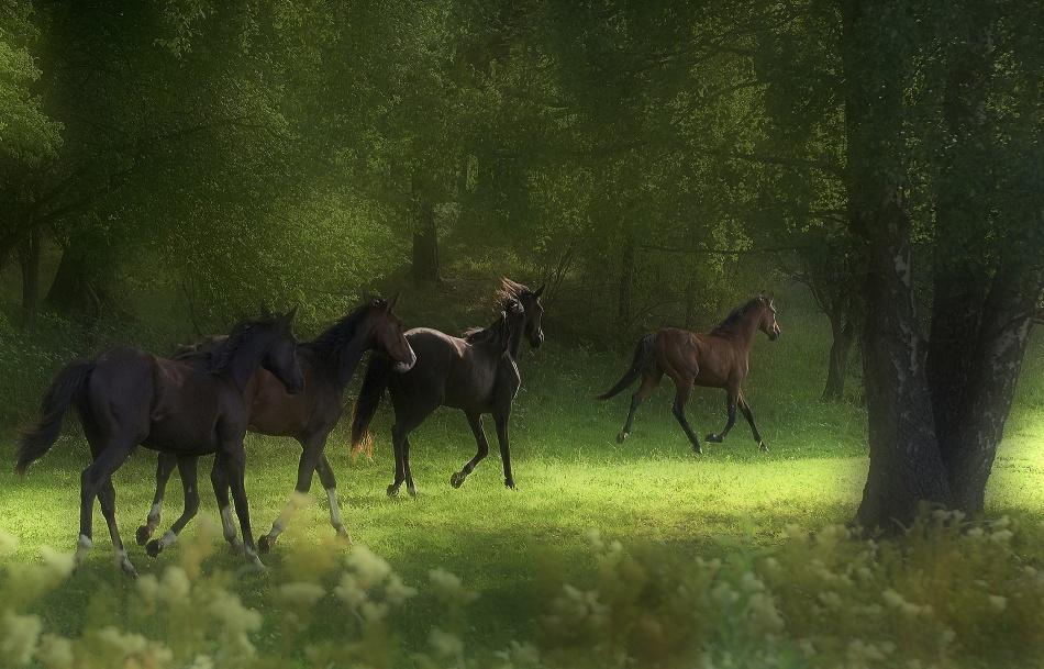 Poster Running Horses