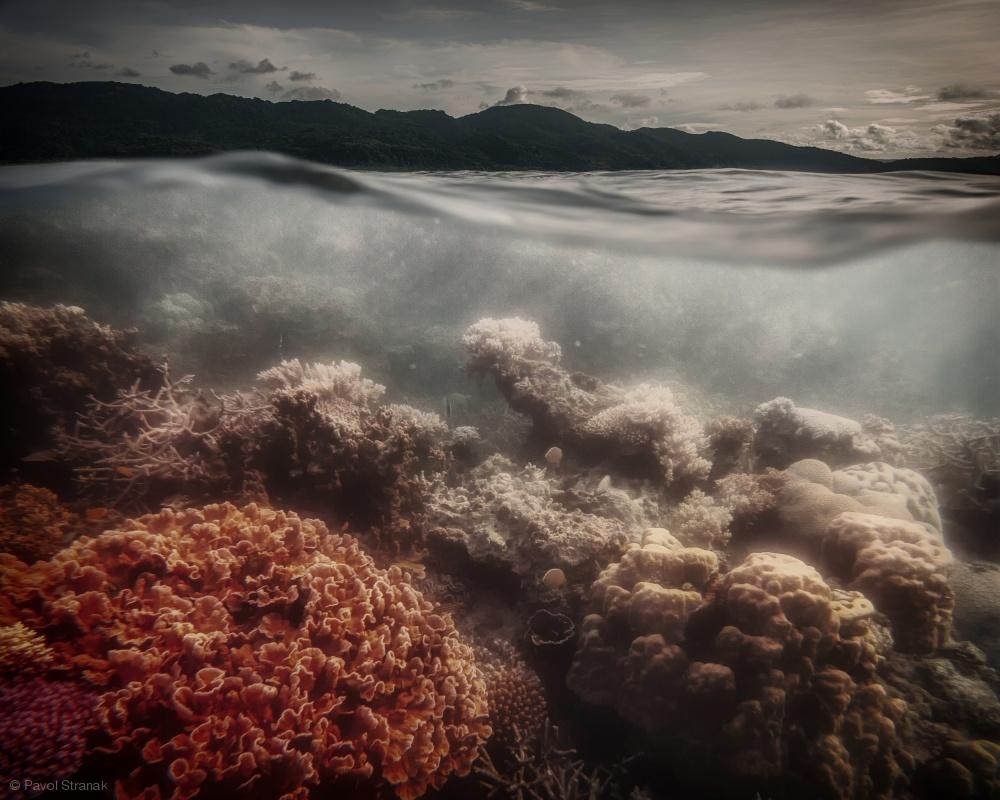 Fotokonst underwater evening