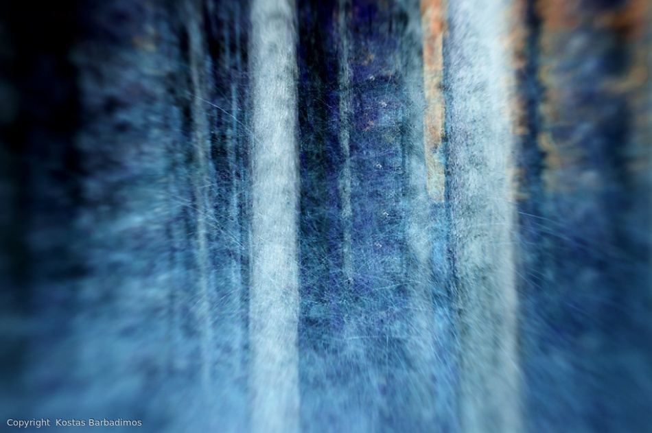 Fotokonst THE FOREST