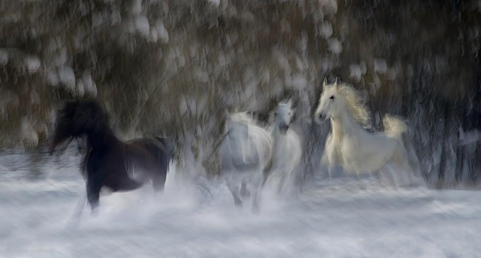 Fotokonst fun in the snow