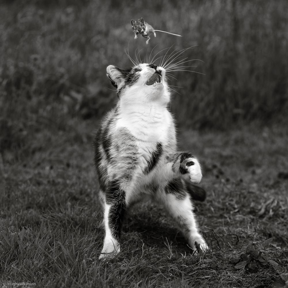 Fotokonst Cat Trap