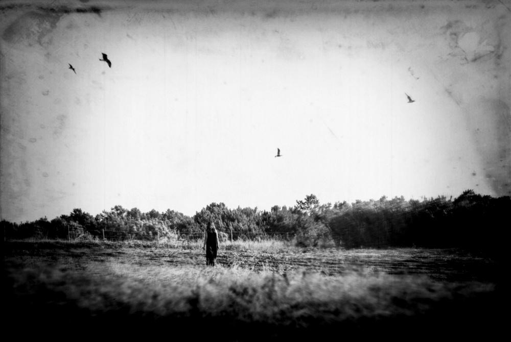 Fotokonst Like a broken winged