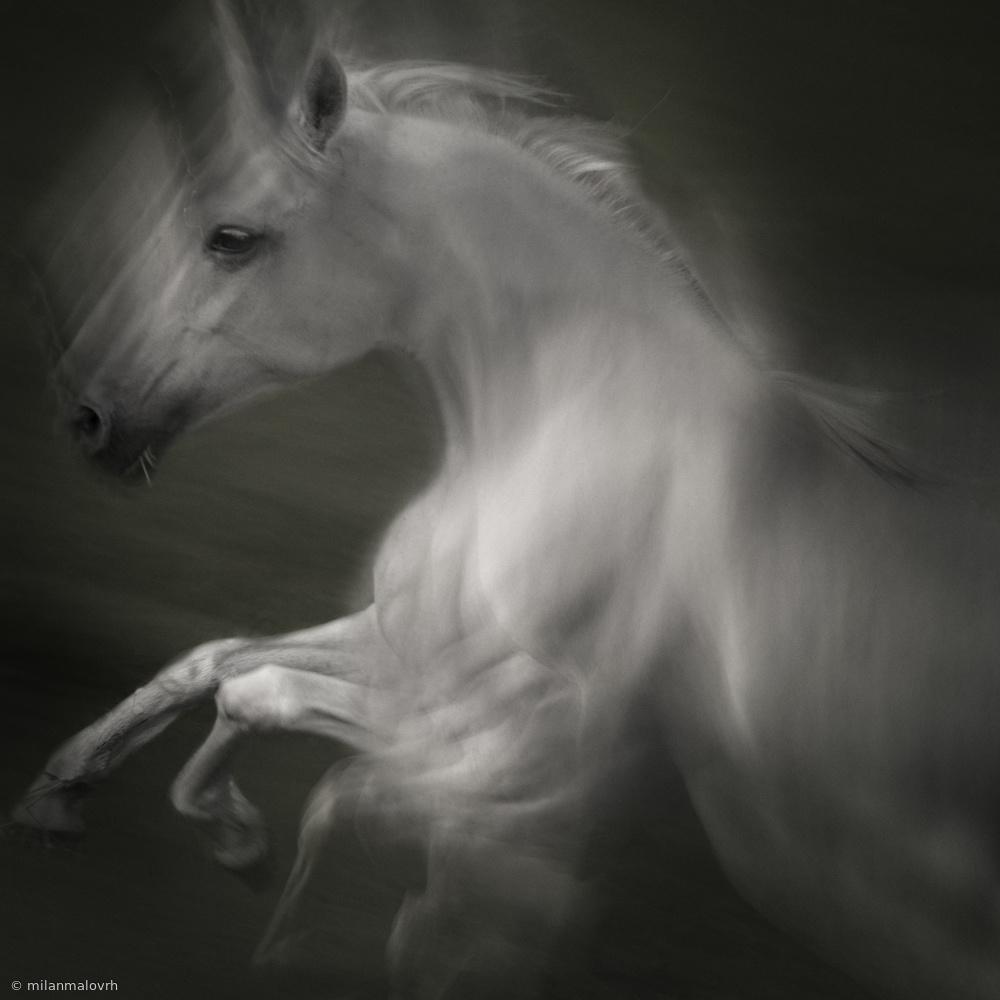 Fotokonst Horse of power