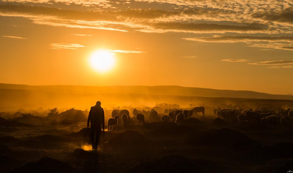 Fotokonst Shepherd and herd