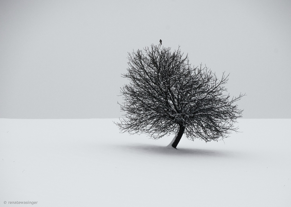 Fotokonst winter