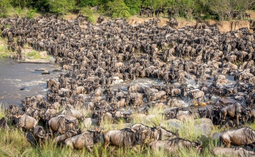 "The amazing ""great migration"" by Jeffrey C. Sink"