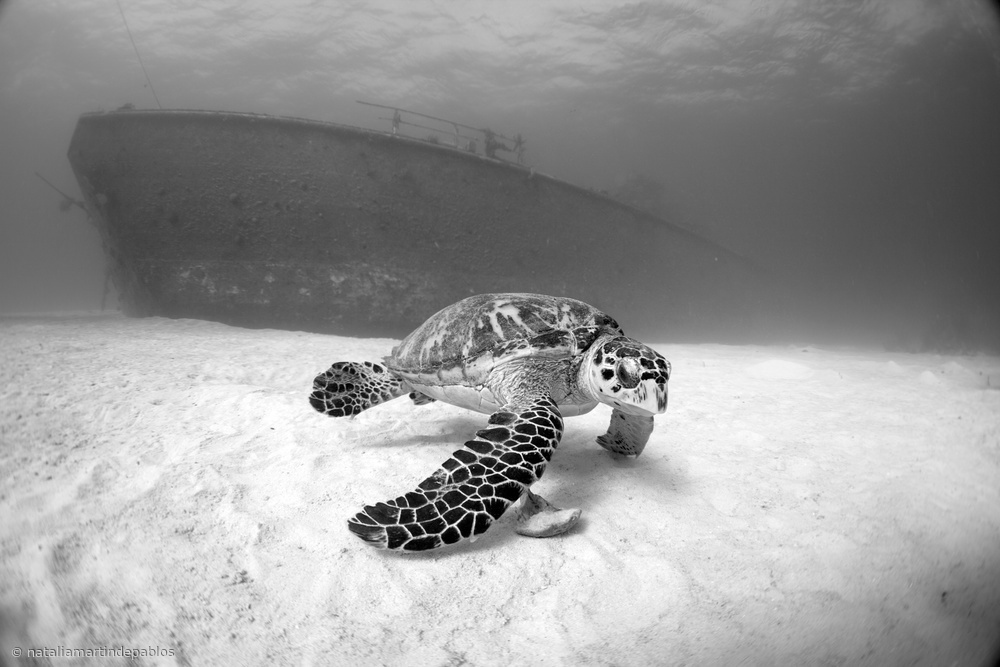 Fotokonst Captain Keith Tibbetts Wreck (Cayman Brac)