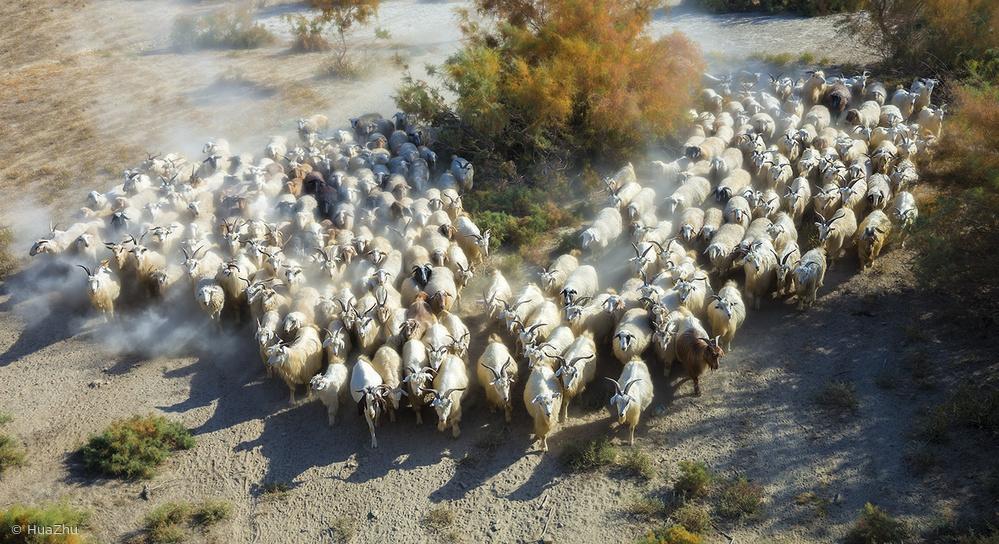 Fotokonst Sheep