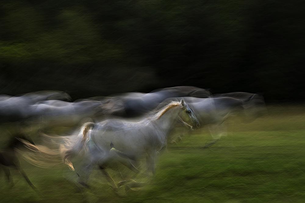 Fotokonst Galloping