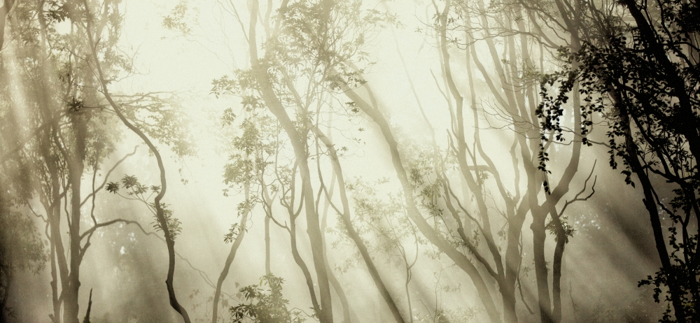 Fotokonst Fog