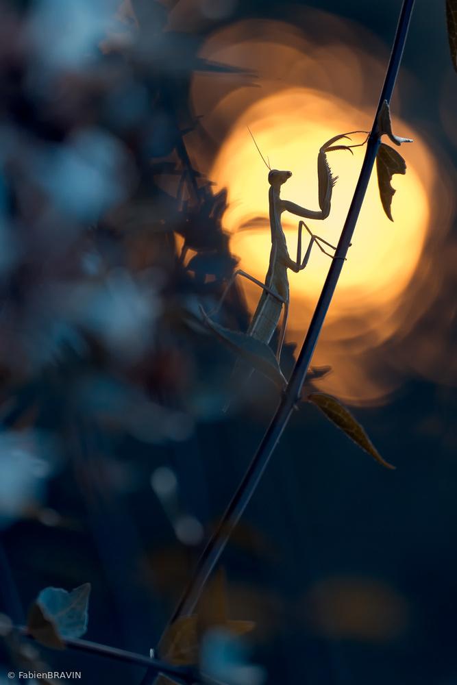 Fotokonst Light is Life