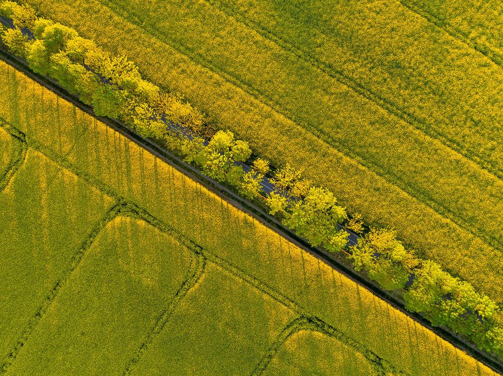 Fotokonst Through the fields