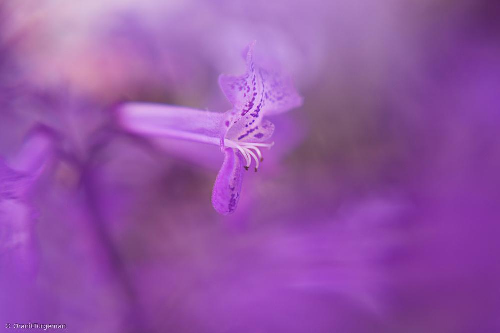 Fotokonst Purple Haze