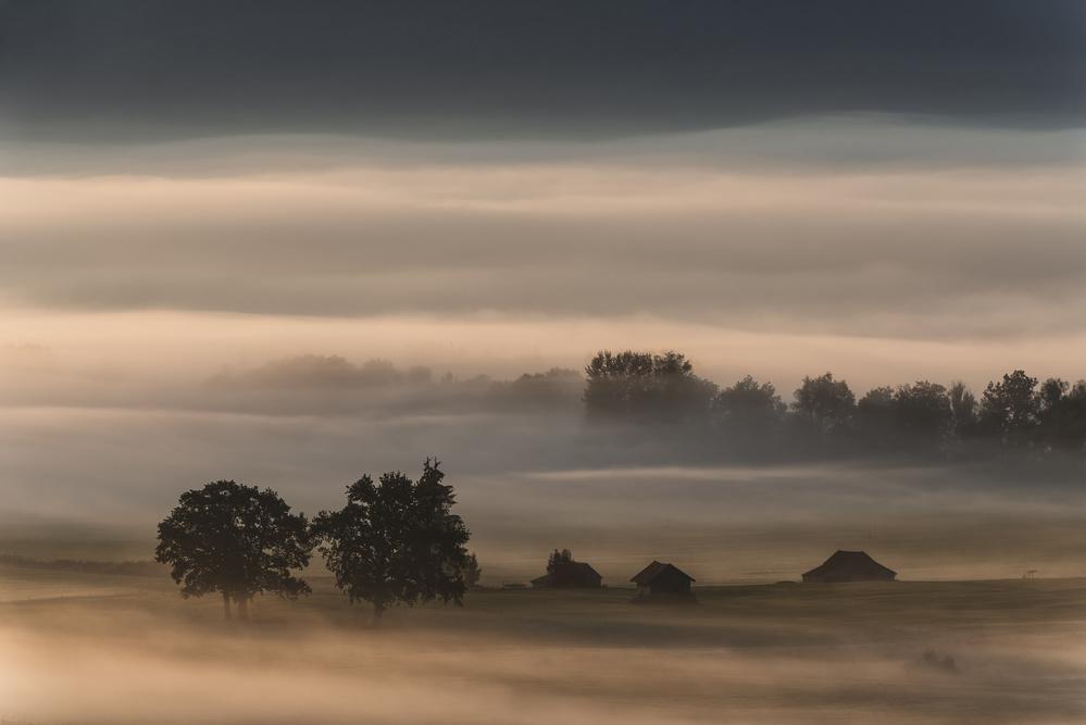 Poster Dense fog over the moos...