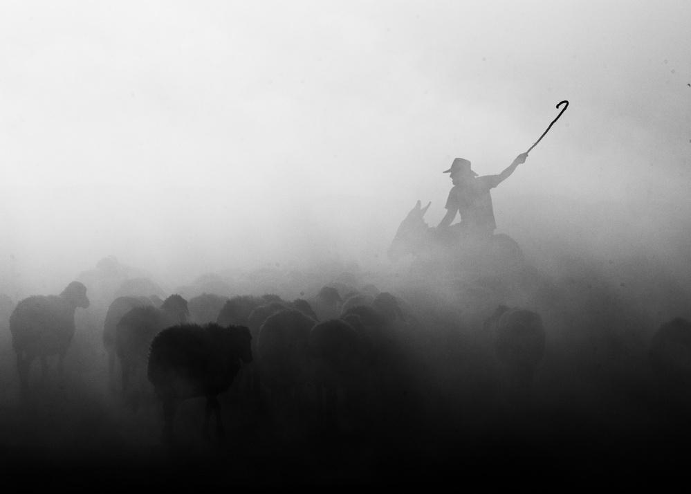 Fotokonst Shepherd herd