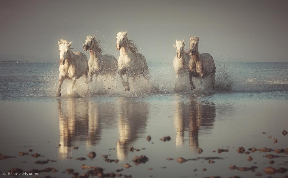 Fotokonst Camargue Horses