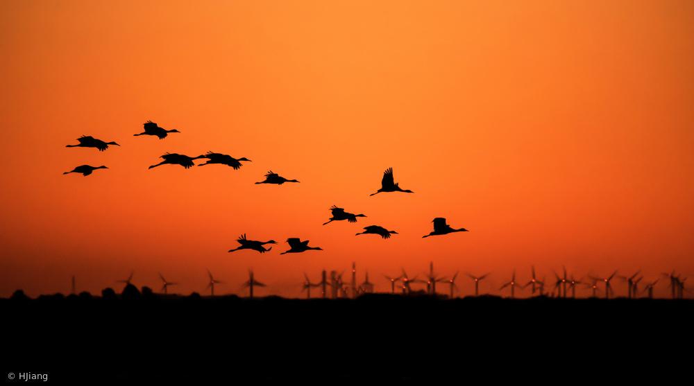Fotokonst Cranes and wind farm