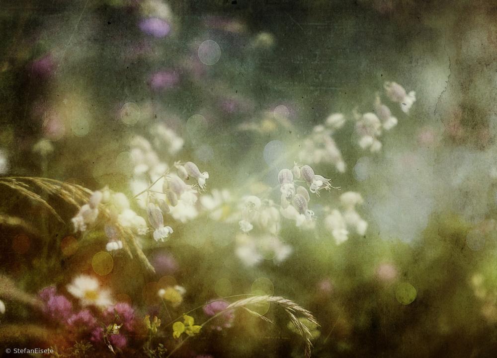 Fotokonst Summercolors...