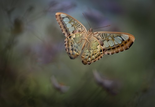 Landing 2 by Heather Bonadio