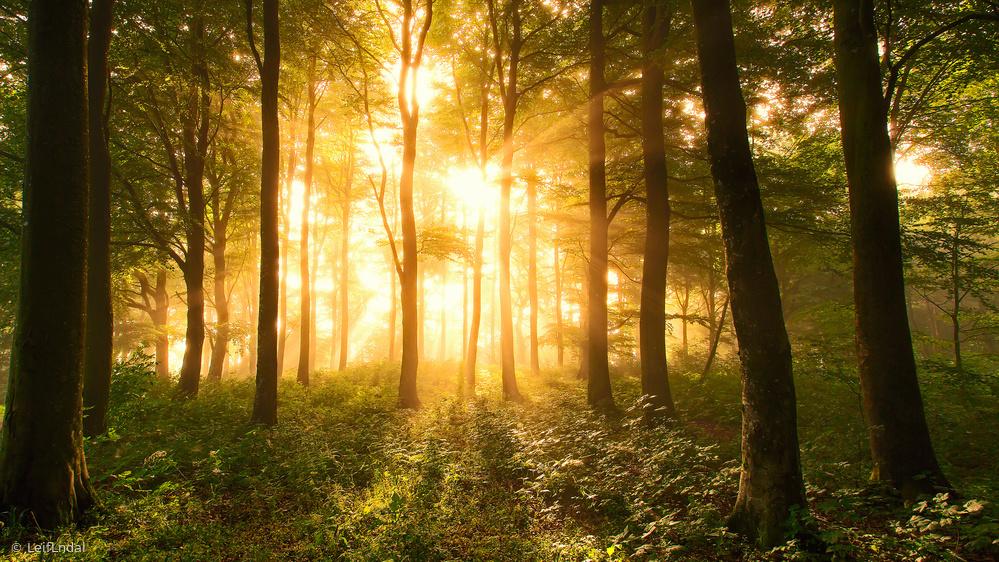 Fotokonst Light in the Forest.