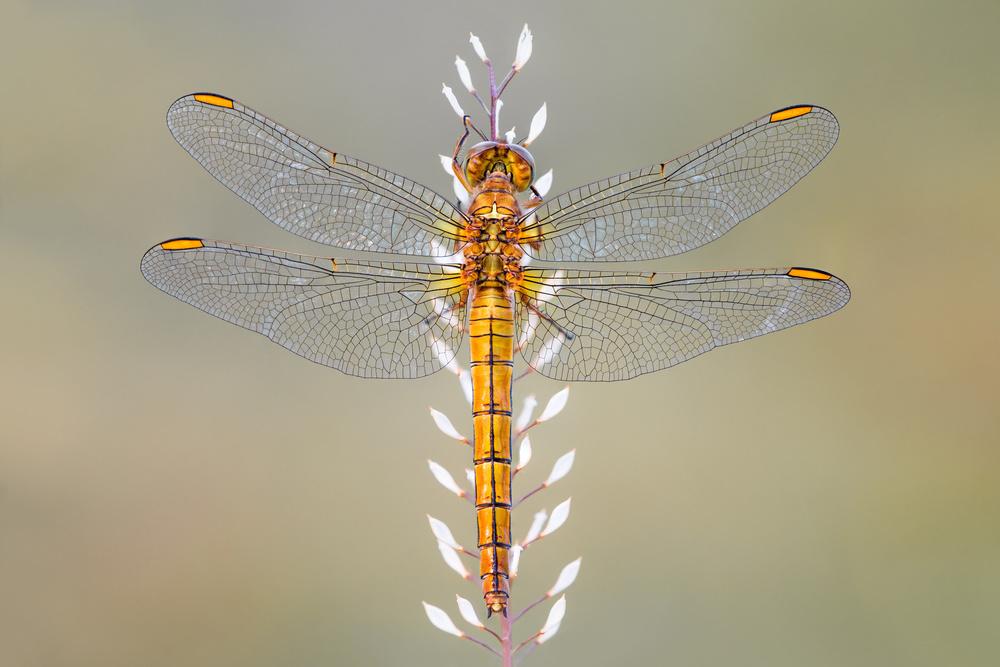 Fotokonst Dragonfly