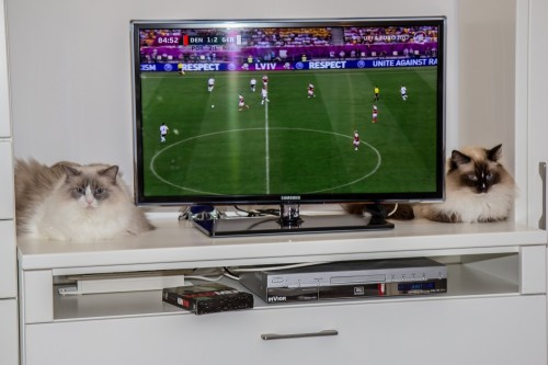 No interest in football by Melitta Oltmanns