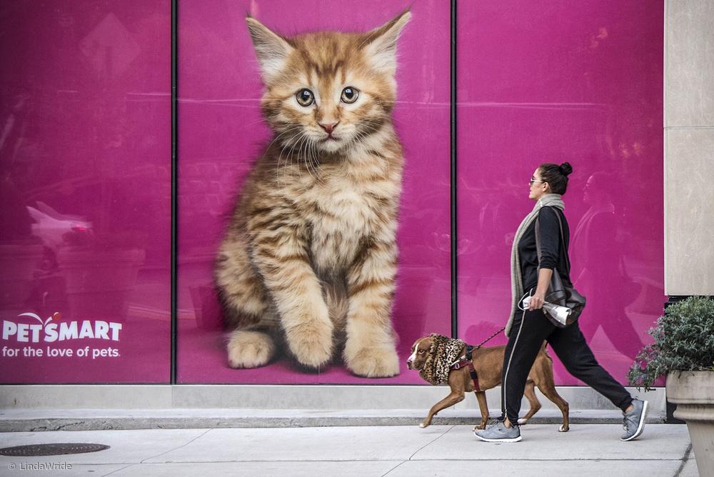 Fotokonst Feline canine
