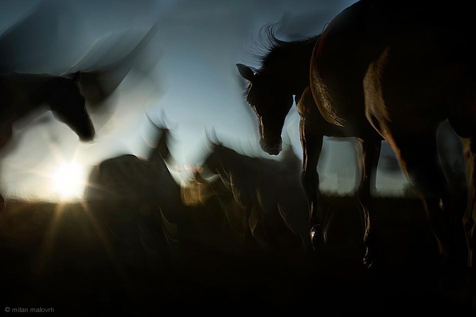 Fotokonst moving shadows
