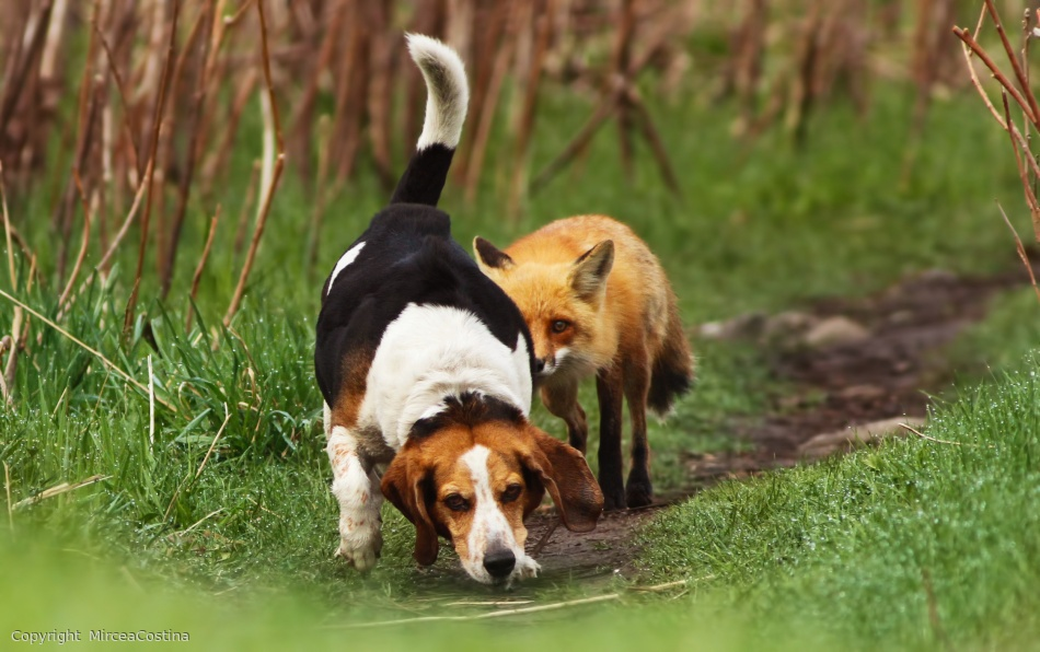 Fotokonst Worlds worst hunting dog