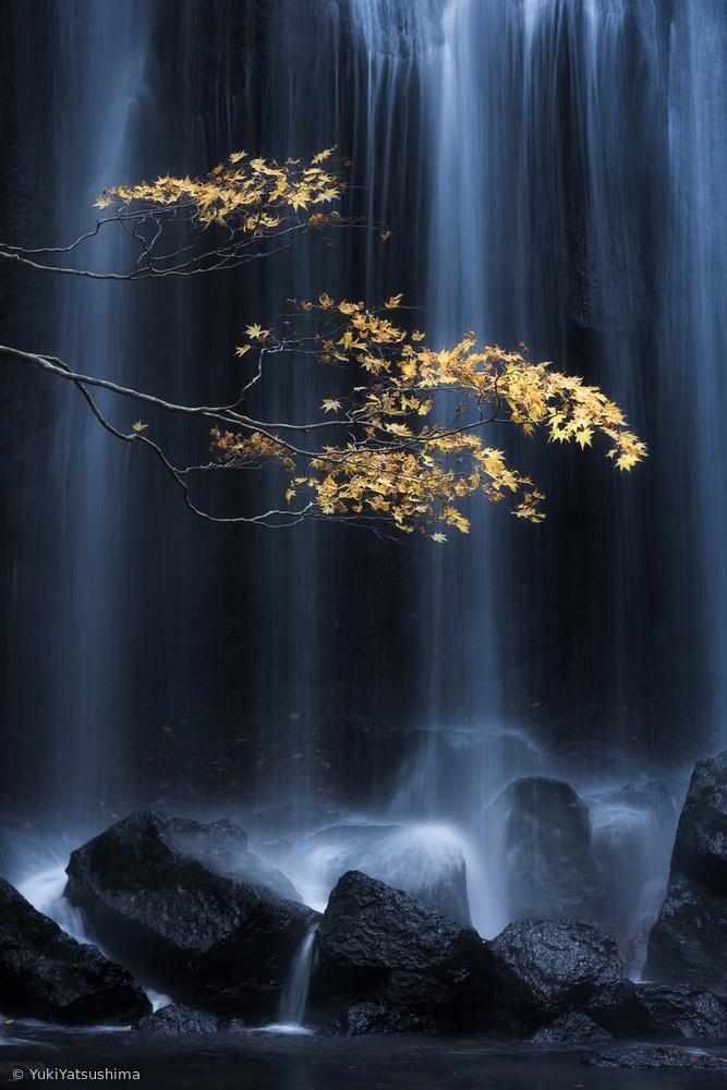 Fotokonst Yellow Autumn