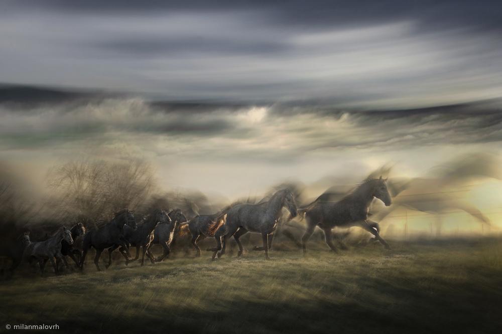 Fotokonst in gallop
