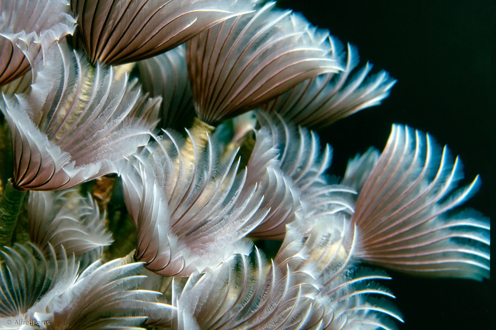 Fotokonst Feather Duster Worms