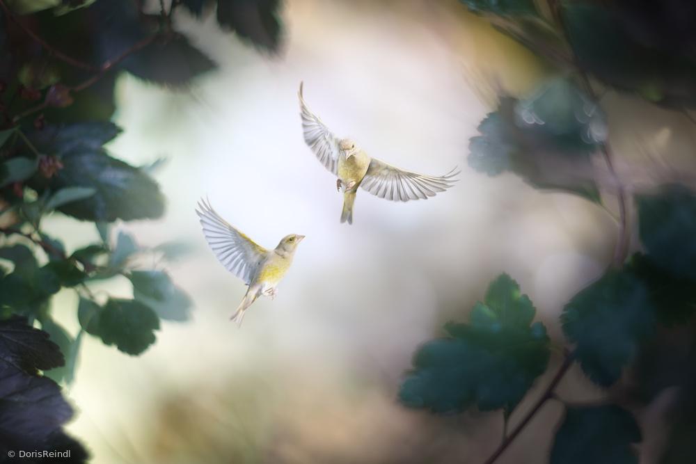 Fotokonst Bird