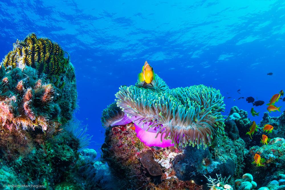 Fotokonst Sea life