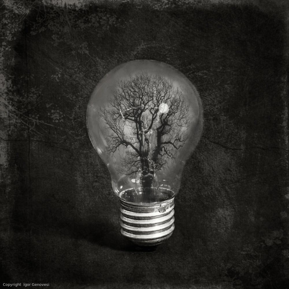 Fotokonst the tree