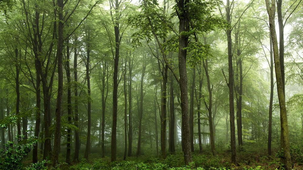Fotokonst Forest...